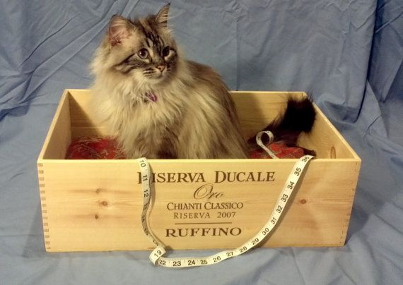 Wine-Crate Pet Bed / Got no shortage of these!