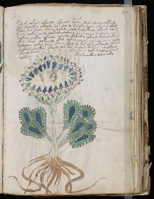 Voynich Manuscript.  Full volume available as high-quality scans on archive.org.