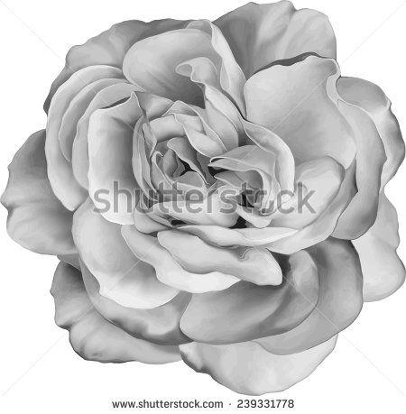 Black and white Rose Flower isolated on white background. Vector illustration