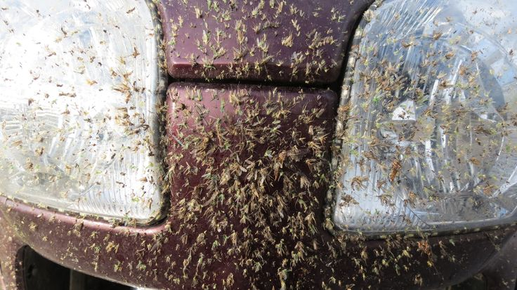 Just a few bugs - From the back of a Goldwing