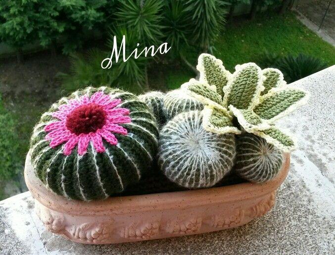 17 best images about piante grasse on pinterest crochet for Piante grasse uncinetto