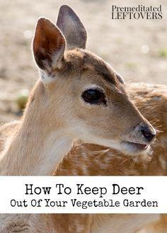 21 Best Bad Deers Images On Pinterest Deer Resistant Plants Deer And Deer Repellant