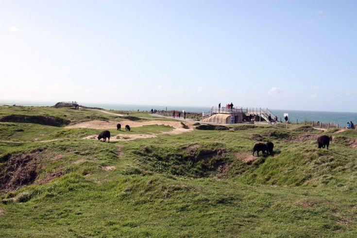 Schapen bij bunkers bij Pointe du Hoc in Normandië Frankrijk