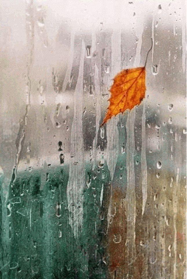 Гифка дождь за окном осень прямо аптечке