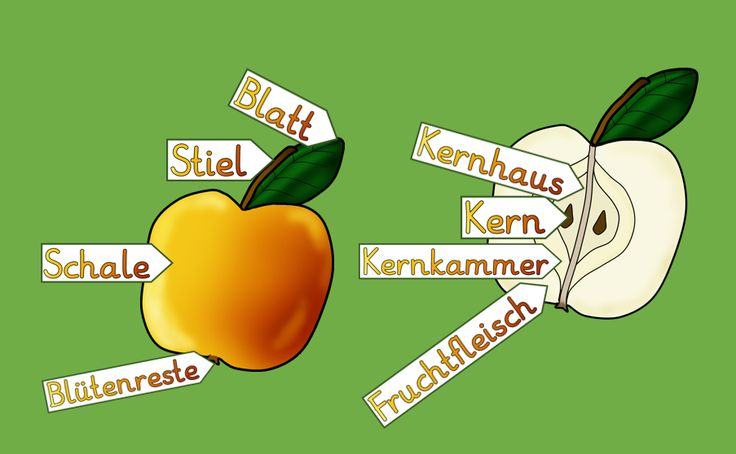 ...für den Anfangsunterricht,  Gedacht für die Arbeit mit der Anlauttabelle und den Sachunterricht.      Apfelbuch          Tafelkarten zu...
