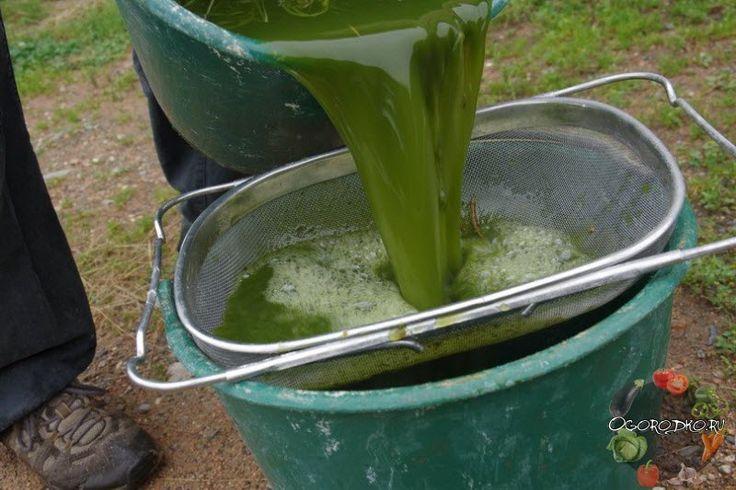Как приготовить удобрение из крапивы, как использовать, для каких растений применять, а также удобрение из крапивы и одуванчиков, для клубники, огурцов, томатов, комнатных цветов, с дрожжами и без