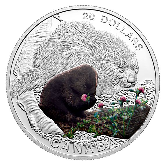 1 oz. Fine Silver Coloured Coin – Baby Animals: Baby Porcupine – Mintage: 7,500 (2016)