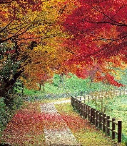 I woould like to go for a long walk here,where-ever this is