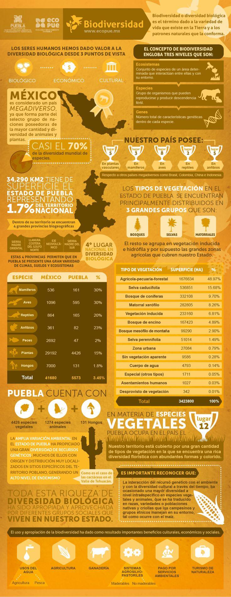 Inforgrafía: Biodiversidad  Puebla