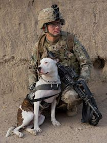 Pitbull serves in our armed forces. But is banned in parts of America?