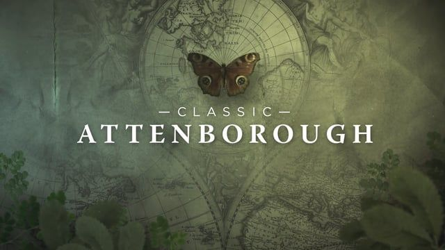 """60 second promotion for BBC Knowledge New Zealands """"Classic Attenborough"""" month."""