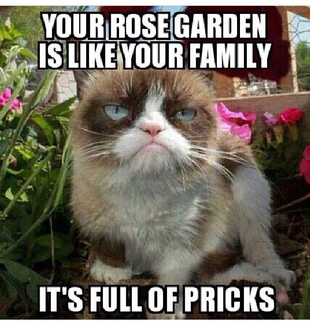 Your rose garden is like your family. It's full of pricks