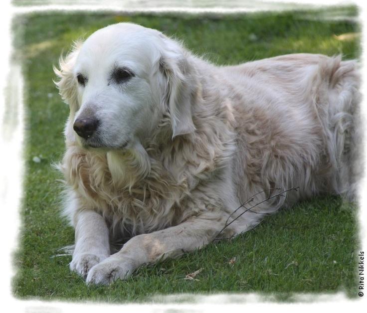 Onze lieve Nouschka op haar 14e verjaardag.  2 mei 1998 - 16 november 2012