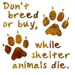 Don't breed or buy... #DogRescue