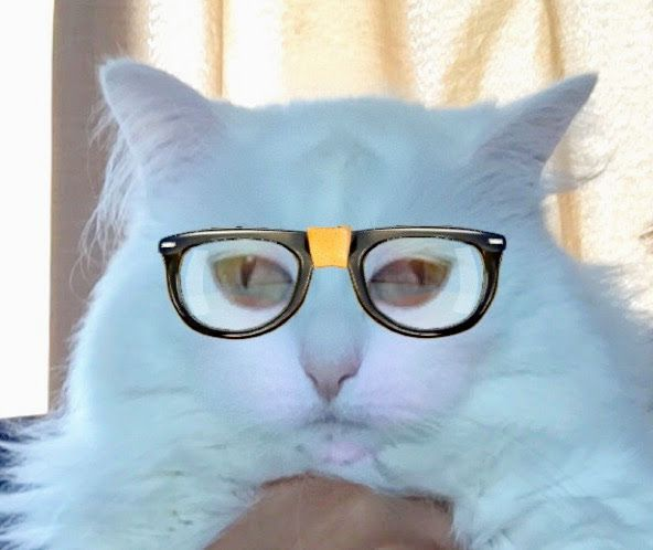 follow me on IG missbettywhite2009 #cat #lol #whitecat #betch #bitch #longhairdontcare #funny #humor #animals #pets #rescue #bettywhite #snapchat #nerd #cheeks #raybans #hipster