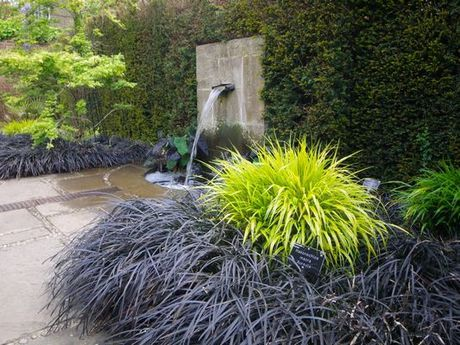 Black Mondo Grass & japanese Forest Grass