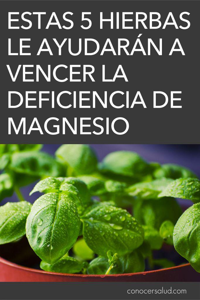 Estas 5 hierbas le ayudarán a vencer la deficiencia de magnesio