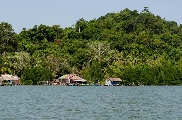 dolphins sighting in Ream Nationalpark #cambodia #dolphins