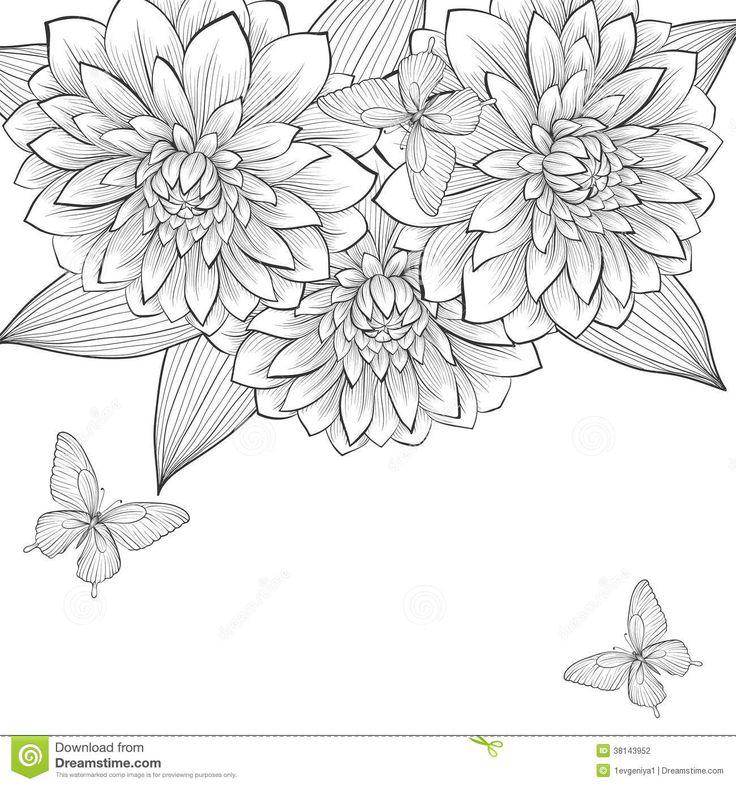 Contour Line Drawing Butterfly : Best images about dahlia studies on pinterest hudson