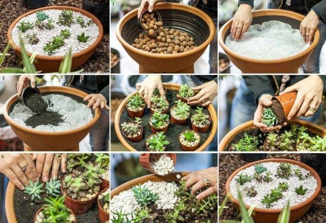 plantas-decorar-hogar-3
