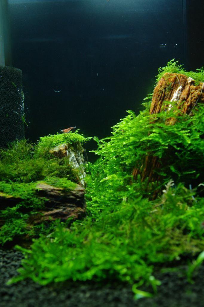 Show Your Nano No Chatter Just Tank And Specs Aquascape Planted Aquarium Aquatic Plants