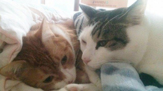 Just Pinned to CatMeows: Sign the Petition || Yongin Dongbu Police South Korea: Thoroughly investigate the woman who sent her adopted cat along with another cat to her parents to be cooked and eaten! http://ift.tt/2l01USN http://ift.tt/2Caeb0z