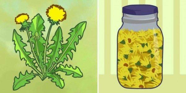 Als je groene vingers hebt, zal je beslist een hekel hebben aan die gele bloemen die overal in je tuin als paddenstoelen uit de grond schieten. Maar paardenbloemen komen eigenlijk goed van pas. Al …