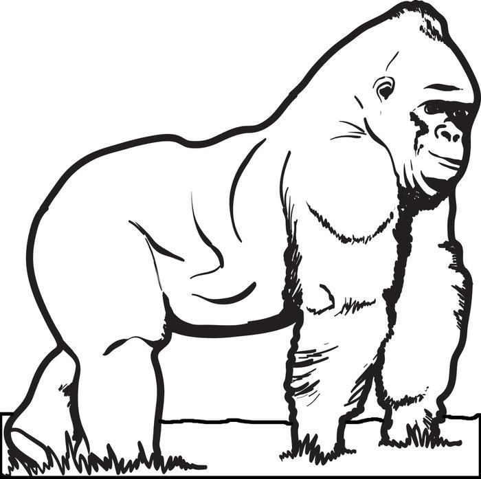 Baby Gorilla Coloring Page