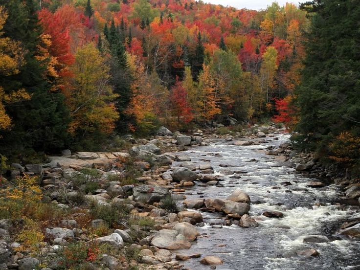 If you're planning a fall foliage tour in Minnesota — or anywhere in the country — this tool can help you make the most of it.