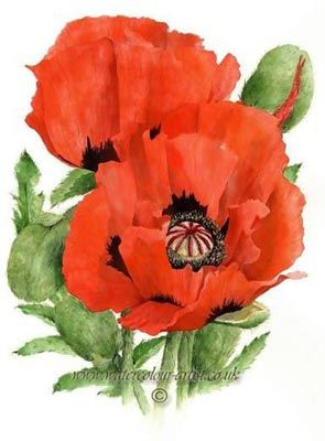 Watercolor poppies poppy watercolour tattoos i like - How to paint poppy flowers ...
