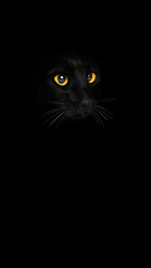 17 best ideas about iphone wallpaper cat on pinterest - Cool backgrounds of cats ...