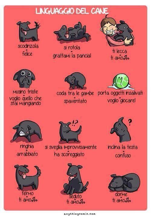 Linguaggio del Cane [via @nataliapanatti]