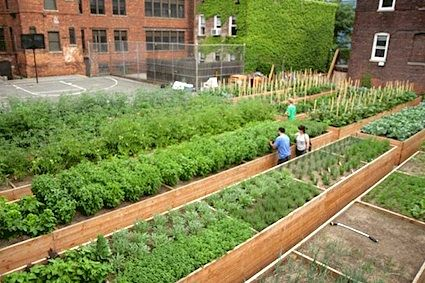 17 best Urban Farming in the City images on Pinterest | Urban ...