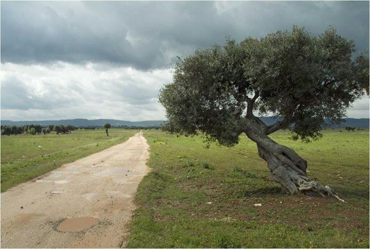 Una #MyPugliaExperience che non dimenticherete mai? Perdervi nelle sconfinate campagne del sud est barese, tra viottoli e ulivi monumentali. Cosa aspettate ad immergervi in questo piccolo paradiso? Vi aspettiamo in #Puglia!