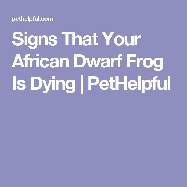 Signs That Your African Dwarf Frog Is Dying | PetHelpful