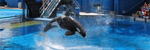 One Ocean: Ballenas Orcas y muchas emoción en SeaWorld - Secretos De La Florida - Información en Español sobre Disney World, Universal Studi...