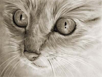 The secret to dramatic, no shine, black and white pencil drawings.