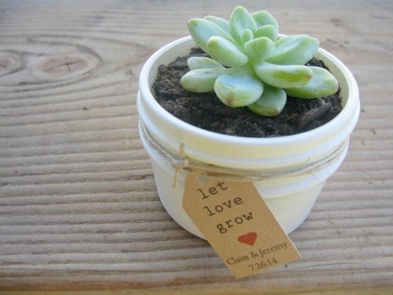 100 Succulent Favors in 4 oz Jam Jars with Twine White or Ivory with Let love grow tags