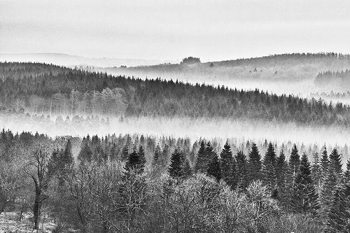 Royal Forest of Dean - New Fancy Viewpoint