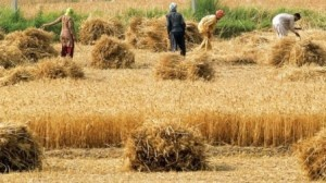 Rice Exporters Of Pakistan: According to the most recent calculated aphorism of United Nations has been revealed that every eighth person of the world is facing hunger each day. Grains are used as cor...