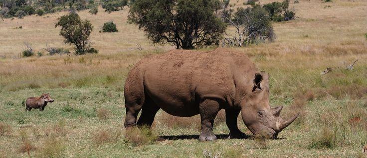 Daytrip from Johannesburg: The Big 5 spotting in Pilanesberg NP