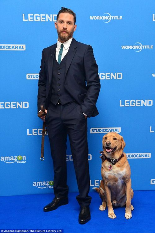 Tom Hardy and his dog Woody.  Legend premiere, September 2015.