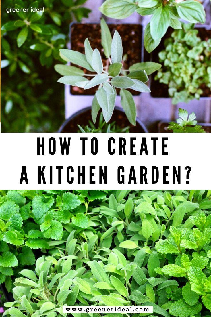How To Create A Kitchen Garden Infographic Vegetable Garden