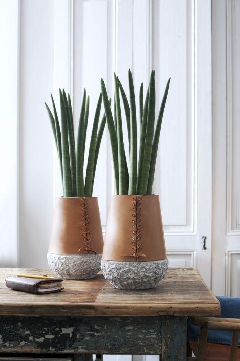 Die Zimmerpflanze dieses Sommers ist der Bogenhanf, auch bekannt als Sansevieria. Jeden Monat steht eine andere Pflanze als Zimmerpflanze des Monats im Mittelpunkt der Aufmerksamkeit. Machen Sie auch mit?Das ist ganz einfach mit unserem POS-Material, das Sie sich auf dieser Webseite kostenlos downloaden können (s.unten).