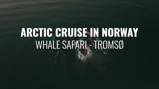 Unique experience in the North of Norway. Sail Luxury with Arctic Princess while watching this fantastic animals. Book your fantastic trip at www.acinorway.com Welcome.