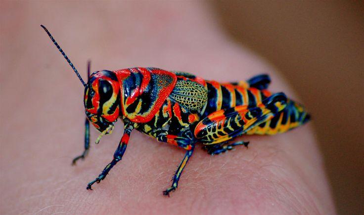 20 Animales con Colores Muy Raros… Quiero Adoptar al