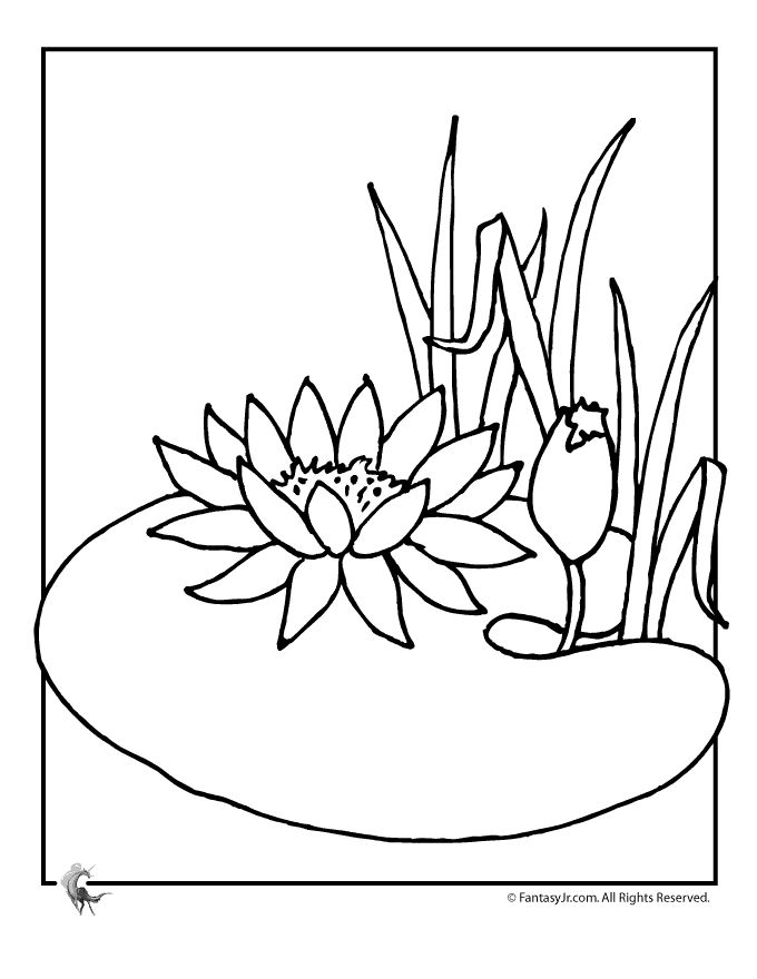 Gallery For Water Lily Coloring Page Lily Pad Drawing Super