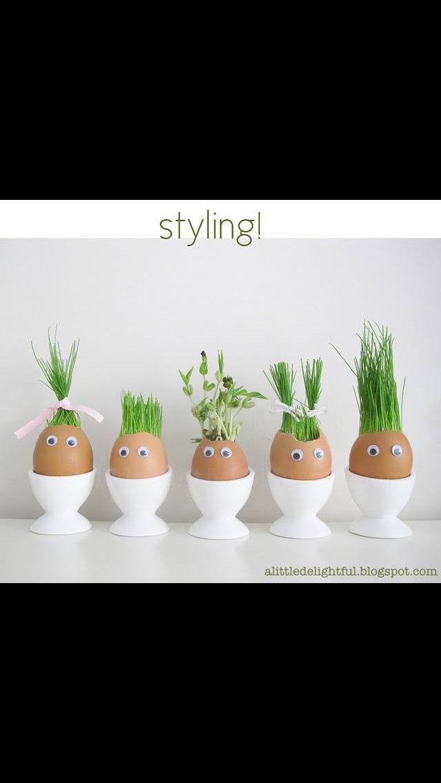 Faire pousser une plante dans une coquille d'œuf