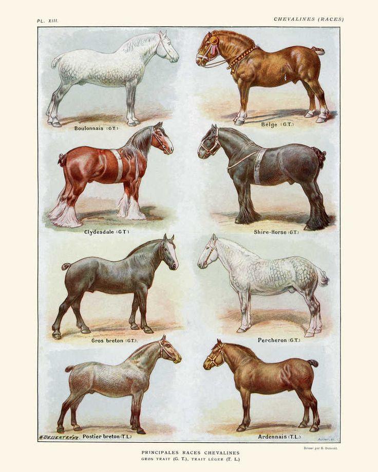 Породы лошадей картинки с надписями