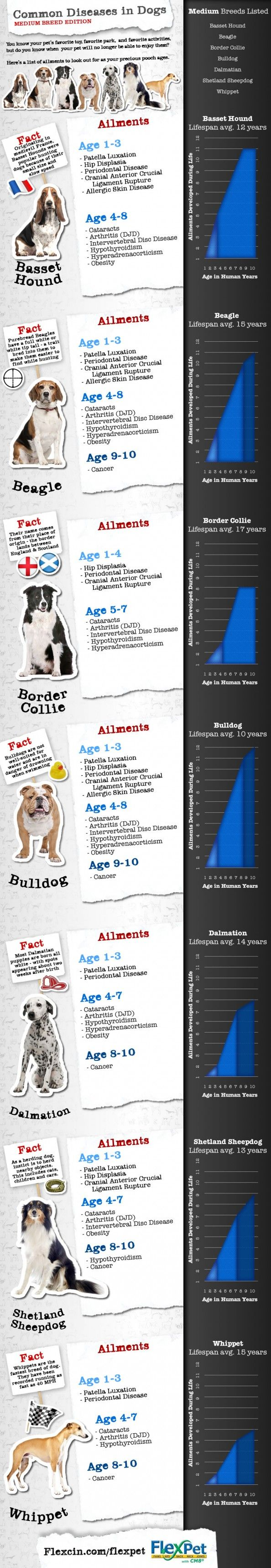 91 best ahg badge pet care images on pinterest pet care